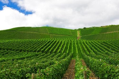 امضای قرارداد همکاری کشاورزی میان ایران و آلمان